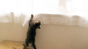 カーテンにじゃれる猫