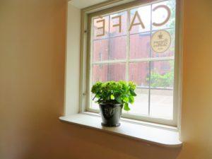 窓辺の紫陽花